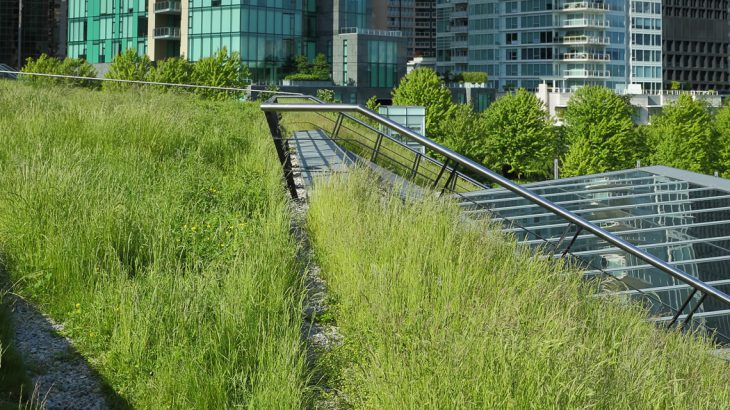 blog-telhado-verde