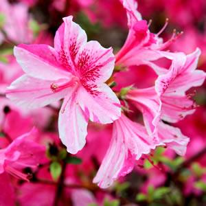 post-plantas-para-jardim-flores