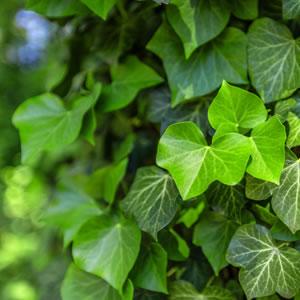 post-plantas-para-jardim-trepadeiras